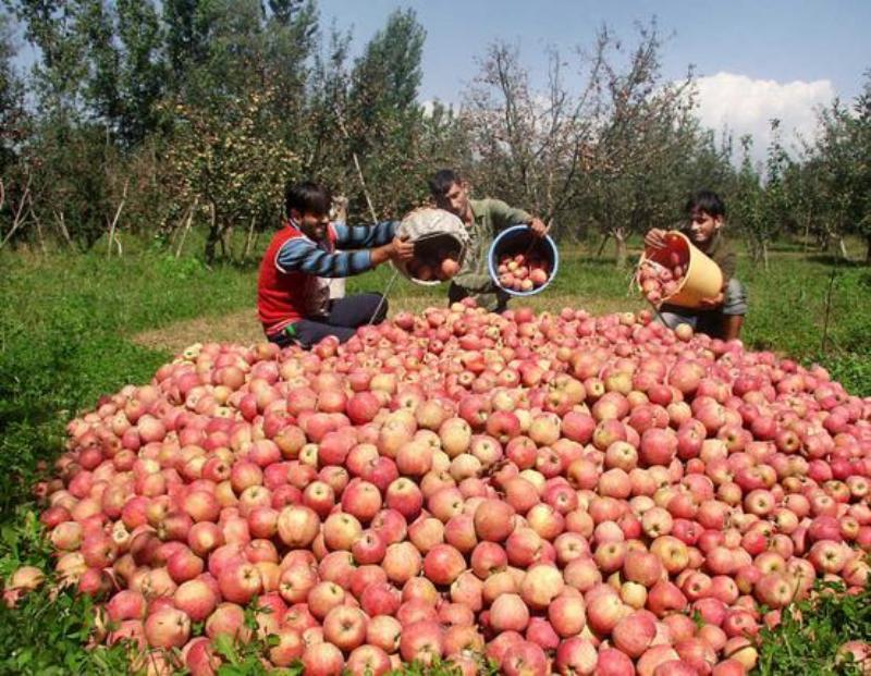 650 هزار نفر از پوشش صندوق بیمه عشایر و روستایی خارج شدند