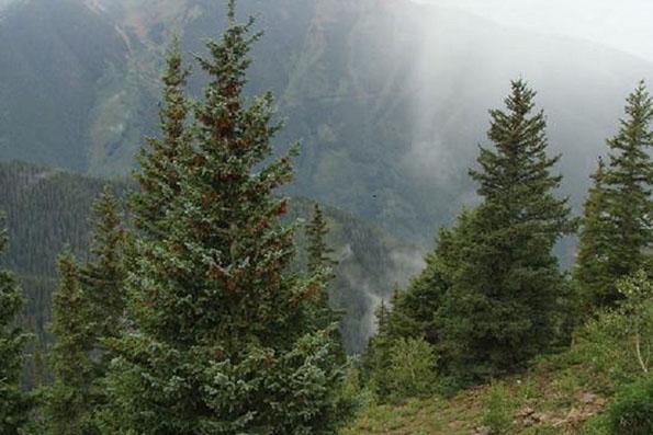 قابلیت جذب دی اکسید کربن توسط جنگل ها محدود است