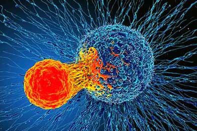 راهی تازه برای درمان تمام سرطانها