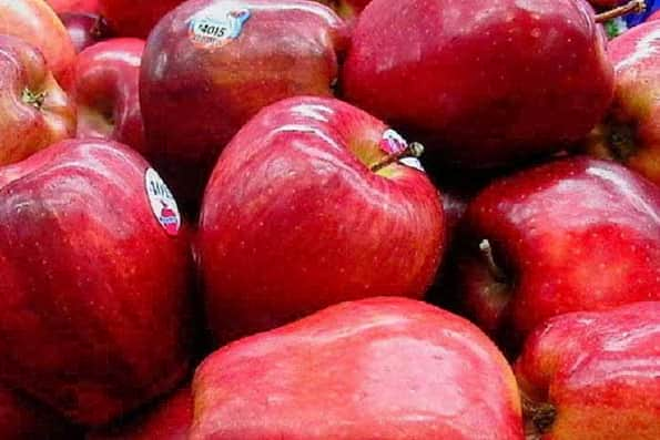 رکورد صادرات سیب شکسته شد