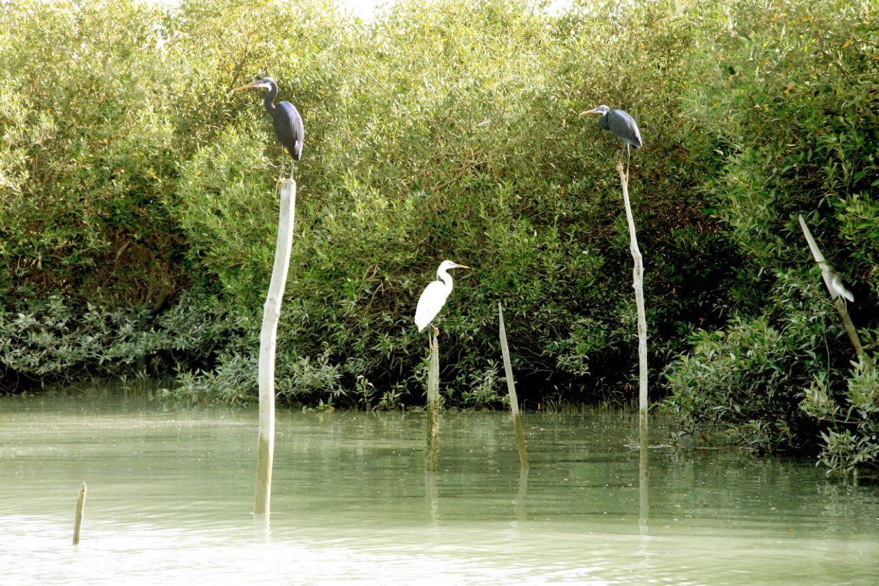 نگاهی به مهدکودک آبزیان در خلیج فارس