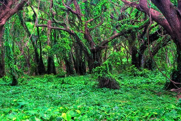 اقدام یونسکو برای ثبت جنگلهای هیرکانی ایران