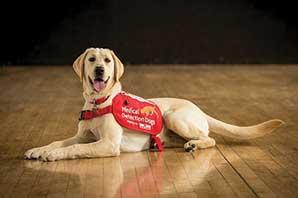 تربیت سگ ها در برای تشخیص مبتلایان به کرونا